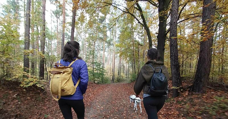 Two hikers wearing backpacks on a trail in the forest, with red fall leaves on the forest floor, and a Dalmation dog in front..