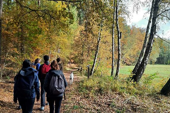 A group of hikers and a Dalmation dog walking a trail with fall leaves on the forest floor, and a green field of grass on the right side.